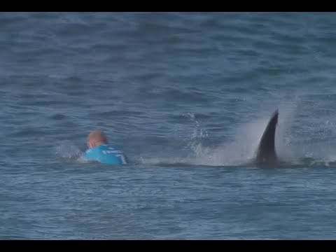 Surfer Fights Off a Shark in Competition