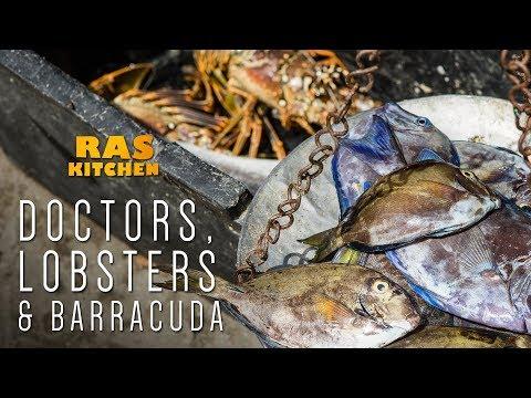 Doctors Lobsters Barracuda & Macca Back!