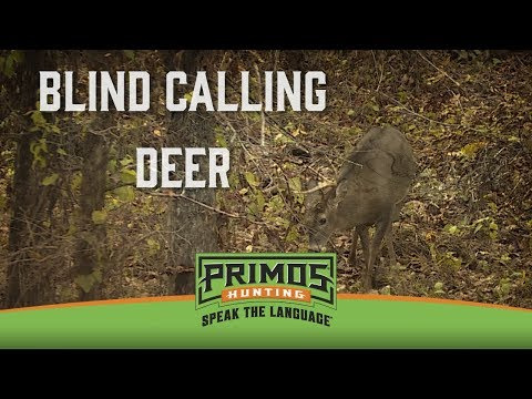 Tips for Blind Calling Deer video thumbnail