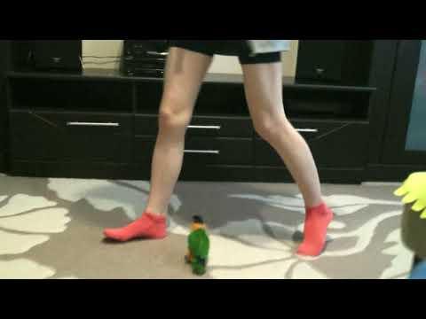 Настырный попугай