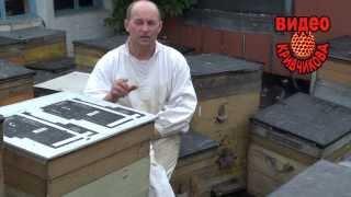 Смотреть онлайн Весеннее развитие рабочей пчелиной семьи