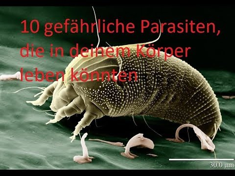 Die Befreiung von den Parasiten m ingerlejb