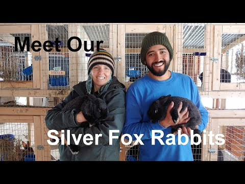 , title : 'Introduction to Our Silver Fox Rabbits: Mixed breed for meat and fur.