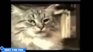 Свежая подборка приколов с котами Часть 2