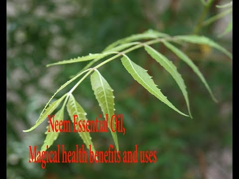 Neem Essential Oil, Magical health benefits and uses, Education