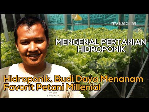 Hidroponik, Budi Daya Menanam Favorit Petani Millenial