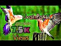 Ural pakhi 2 lyrical song..।। উড়াল পাখি ২ er gaan...।। (ERH PrAnK)