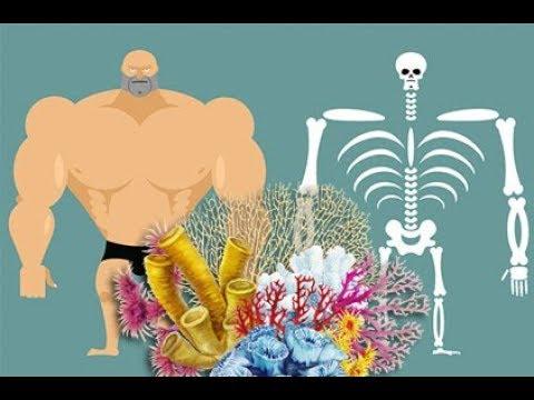 Crossbar mit Brust Osteochondrose