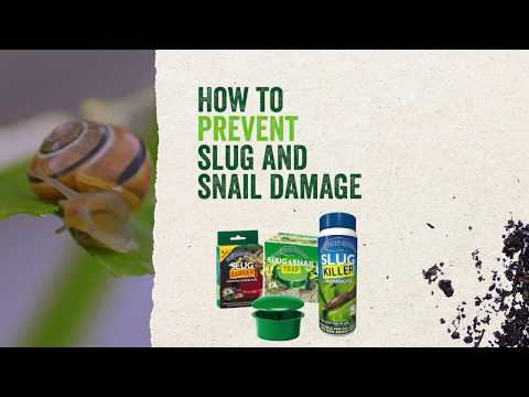 Growing Success Slug Killer Advanced Video