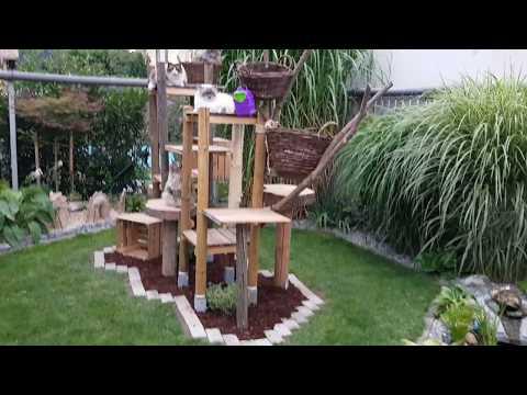 Maine Coon Katze ...  Outdoor Kratzbaum ...