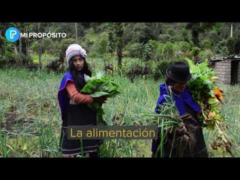 Seguridad alimentaria y nutricional de las comunidades Misak