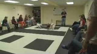 puppy training classes at www.k9-1.com