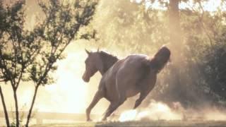 Les ancêtres chevaux