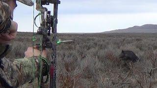 Archery Boar Hunt – 5 Pigs Down & Crazy Kill shots!