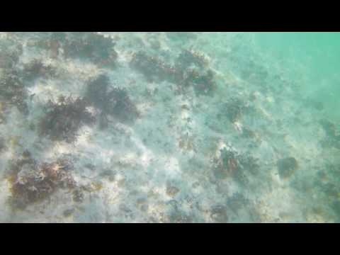 Snorkel Video – Barcelo Maya Resort – Akaso EK7000