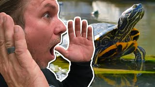 BUILDING AN INSANE TURTLE POND for my REPTILE ZOO!! | BRIAN BARCZYK