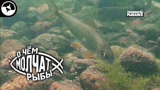 Мурманский рыболовный форум приливы и отливы от ukho