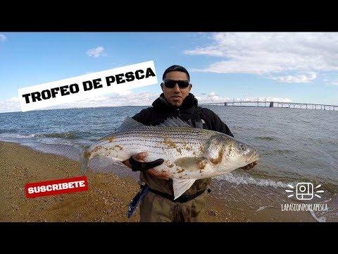 La pesca su un tappo dalla costa