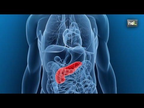 Azúcar en la sangre elevada duele el páncreas