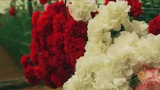 هذا الصباح-رواج متزايد لسوق الزهور شمالي سوريا | Kholo.pk