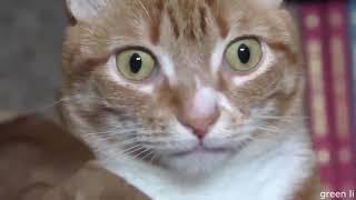 Лучшие приколы с животными 2019 года - смешные приколы с котами №133