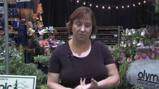Garden & Plant Care : Getting Rid of Rats Without Poison