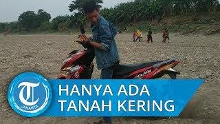 Viral Video Sungai Bengawan Solo Kering Kerontang, Bisa Diseberangi Gunakan Motor