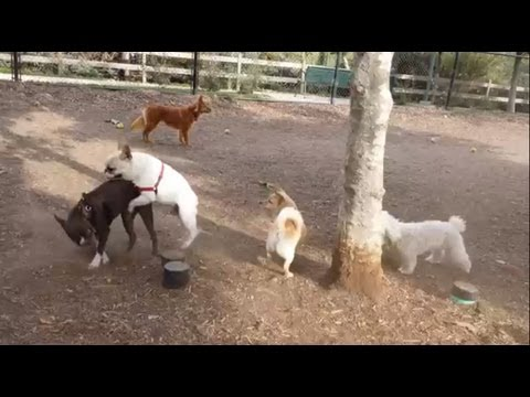 Los Angeles Dog Parks: Oberrieder Dog Park