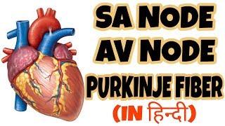 Electrical Cardic Conduction system of heart | AV Node,SA Node, Purkinje Fiber | Become Doctor