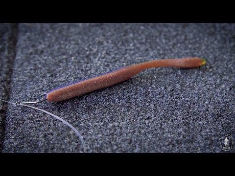 Kung saan live na worm