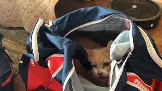 猫と一緒に非常持ち出し防災袋の中身点検
