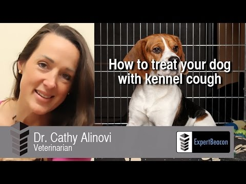Video How to treat your dog with kennel cough