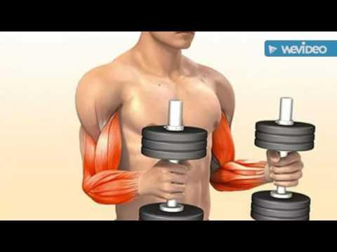 Video Bodybuilding  |  Latihan Membentuk Otot Bicep/ Lengan bagian Depan