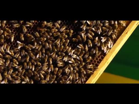 Пчеловодческое Предприятие Лысонь Польша