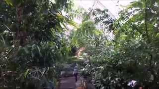 preview picture of video 'Kew Royal Botanic Gardens London - Inside The Palm House Parterre Ground Level'
