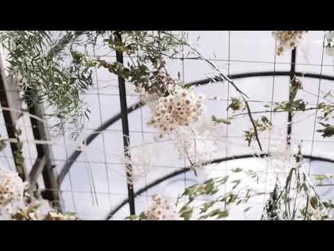 Emoção a flor da pele! Casamento Sorocaba Casamento no Campo Sorocaba Casamento dos Sonhos Sorocaba