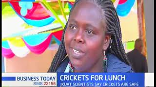Crickets Delicacy: JKUAT scientists say crickets are safe for consumption