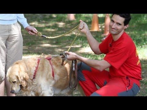 Tipos de correas - Adiestramiento canino - Sapeando