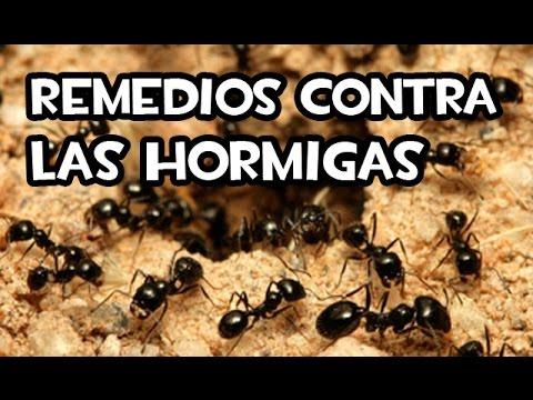 Remedios contra las hormigas | Caseros