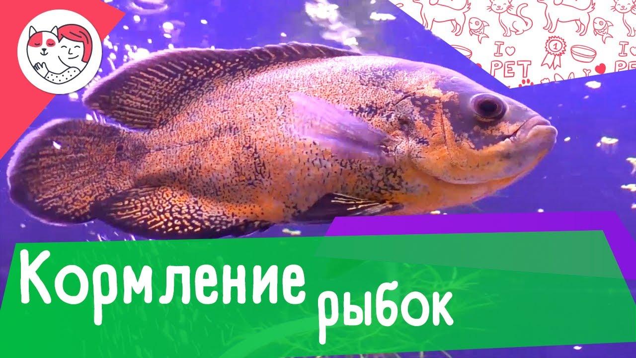 4 правила кормления аквариумных рыбок