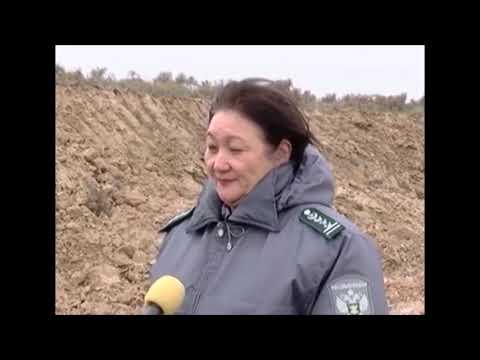 О выявленном снятии и перемещении верхнего плодородного слоя почвы в Республики Калмыкия