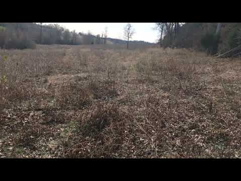 How to plant summer grass in your cattle pastures without any special equipment