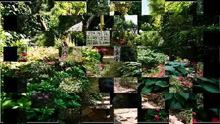 Hinterhof Garten Design Ideen