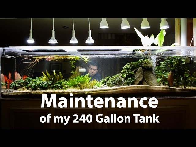 240 Gallon Planted Discus Tank - Maintenance