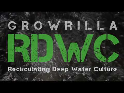 Growrilla hydroponics RDWC recirculating deep water culture system