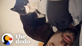 Stray Cat Waits At Guy's Window Until He's Adopted | The Dodo Soulmates