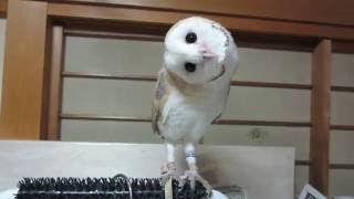 我が家にフクロウがやって来た | Kholo.pk