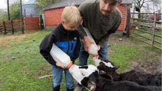 Raising Bottle Calves