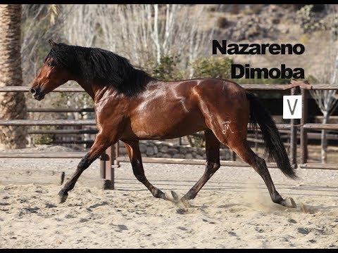 Nazareno Dimoba - Febrero 2018