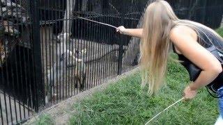 Приколы. Лисичка повисла на клетке. Funny. Fox hung on the cage .